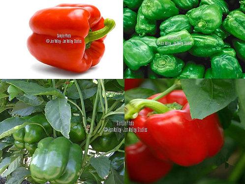 Yolo Wonder Sweet Pepper Seeds Heirloom OP