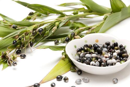 Coix lacryma – jobi --Jobs Tears Ornamental Grass 10 seeds