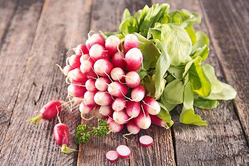 Sparkler White Tip Radish Seed OP NON GMO