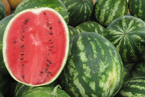 Florida Giant Watermelon - 10 Seeds! Giant fruits! Heirloom = NON GMO