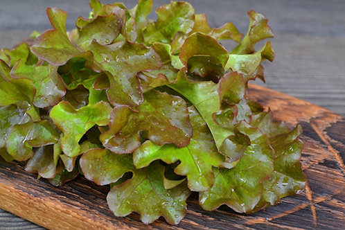 250 seeds - Bronze Guard Leaf Lettuce -Heirloom Oakleaf Type Lettuce