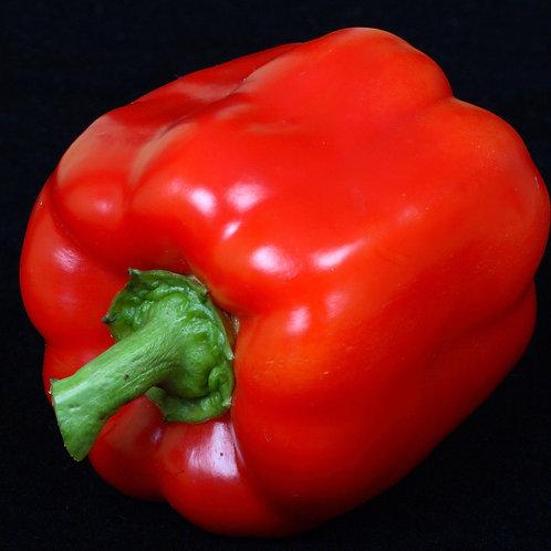 Yolo Wonder Sweet Pepper 10 Seeds Heirloom OP