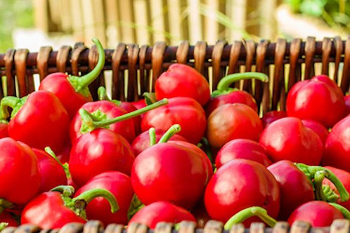 Hot Cherry Pepper- 10 Vegetable Seeds- NON GMO