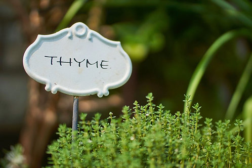Winter Garden Thyme - 100 Seeds -Heirloom -Non GMO
