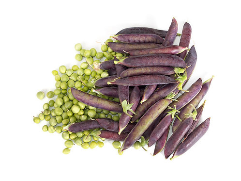 Purple Pod Pea 50 Seeds