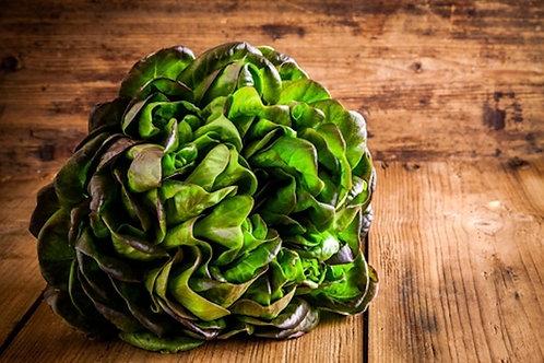 250 SEEDS -Bronze Mignonette Butterhead Lettuce --Heirloom -Beautiful color