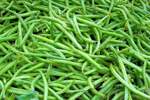 Tenderette Green Pole Bean Premium Seeds