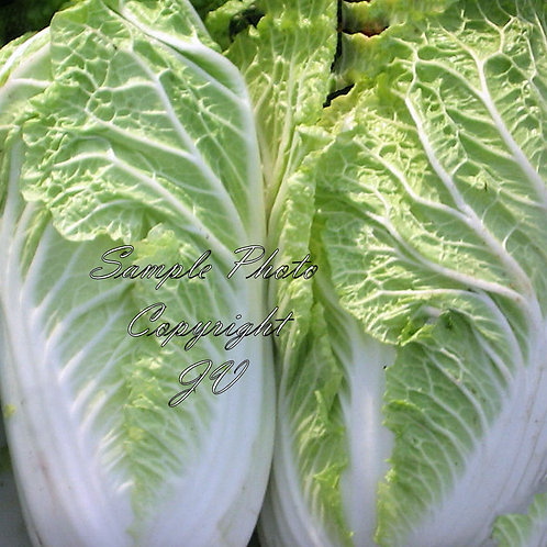 Michihili Chinese Cabbage Seeds - Heirloom