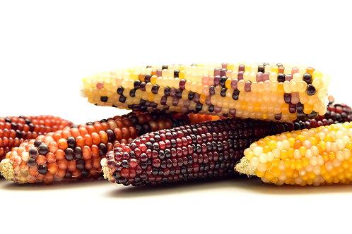 Carousel Ornamental Corn Rainbow Color Mix Flour/ popcorn /Decorations- 20 Seeds