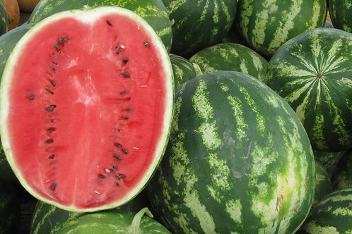 Sugar Baby Watermelon Seeds Heirloom firm red juicy & OH so sweet! Small 6-10