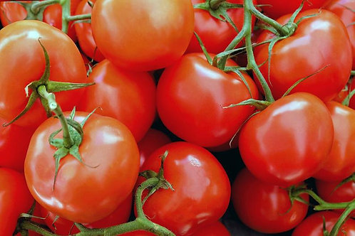 20 Seeds Moneymaker Tomato -Good for Sauce and Fresh- Freezing