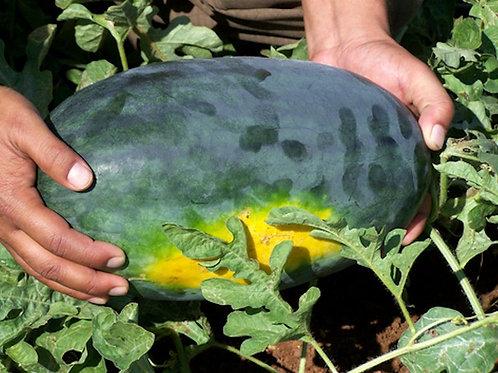 Black Diamond Watermelon Yellow Belly- 20 Seeds! Giant fruits! Heirloom