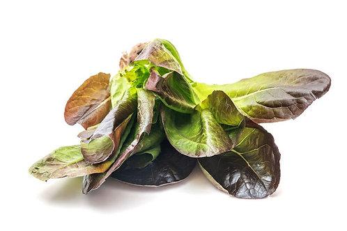 250 SEEDS - Cimmaron Romaine Lettuce --Heirloom Romaine type