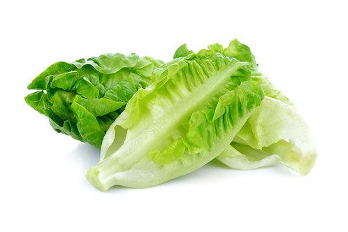 Little Gem Lettuce Seeds NON GMO