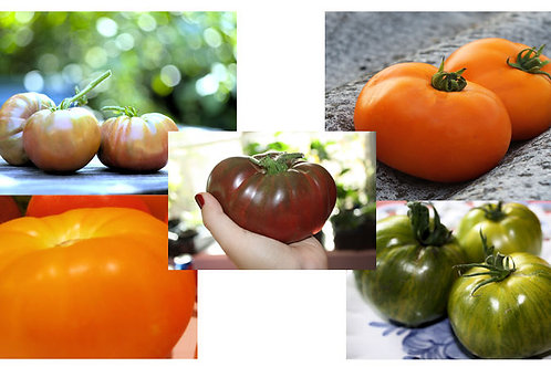 Serendipity's Tasty Tomato Heirloom Rainbow collection 5 Varieties