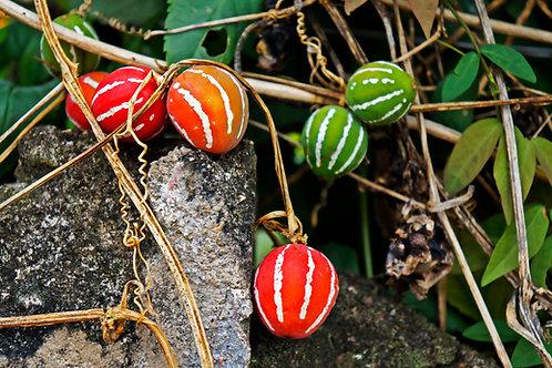 Diplocyclos palmatus Marble Vine 7 seeds
