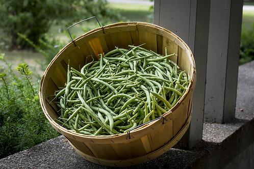 Kentucky Blue Pole Bean Vegetable Seeds 50 Seed Garden Pack