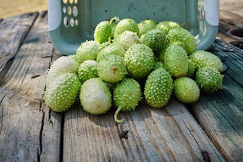 10 Seeds Jamaican Burr Cucumber-Gherkin- Rare = Non GMO