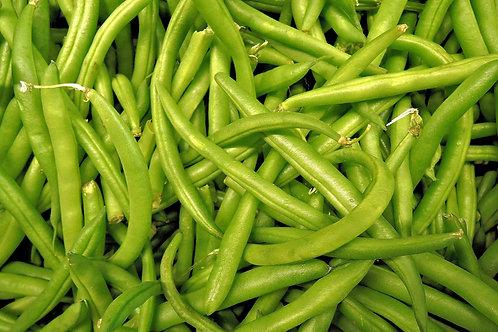Bush Bean Topcrop Vegetable Seeds NON GMO 25 Seed Garden Pack