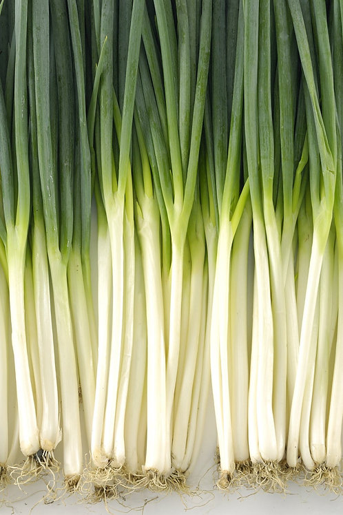 White Spear Green Bunching Organic Onion 50 seeds