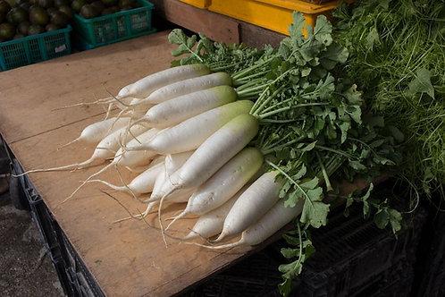 White China Winter Radish app 100 seeds