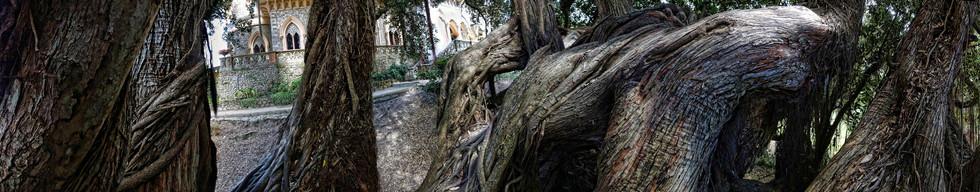 2017 Sintra Parque de Monserrate VIII pa