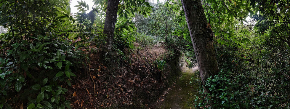 2017 Sintra Parque de Monserrate VII pan