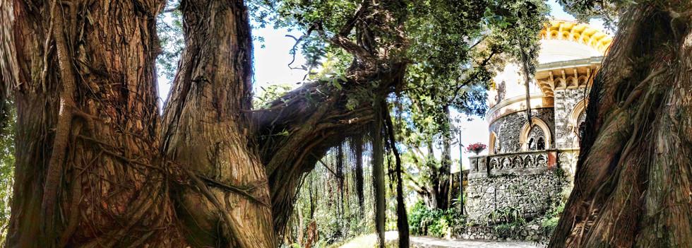2017 Sintra Parque de Monserrate II pano