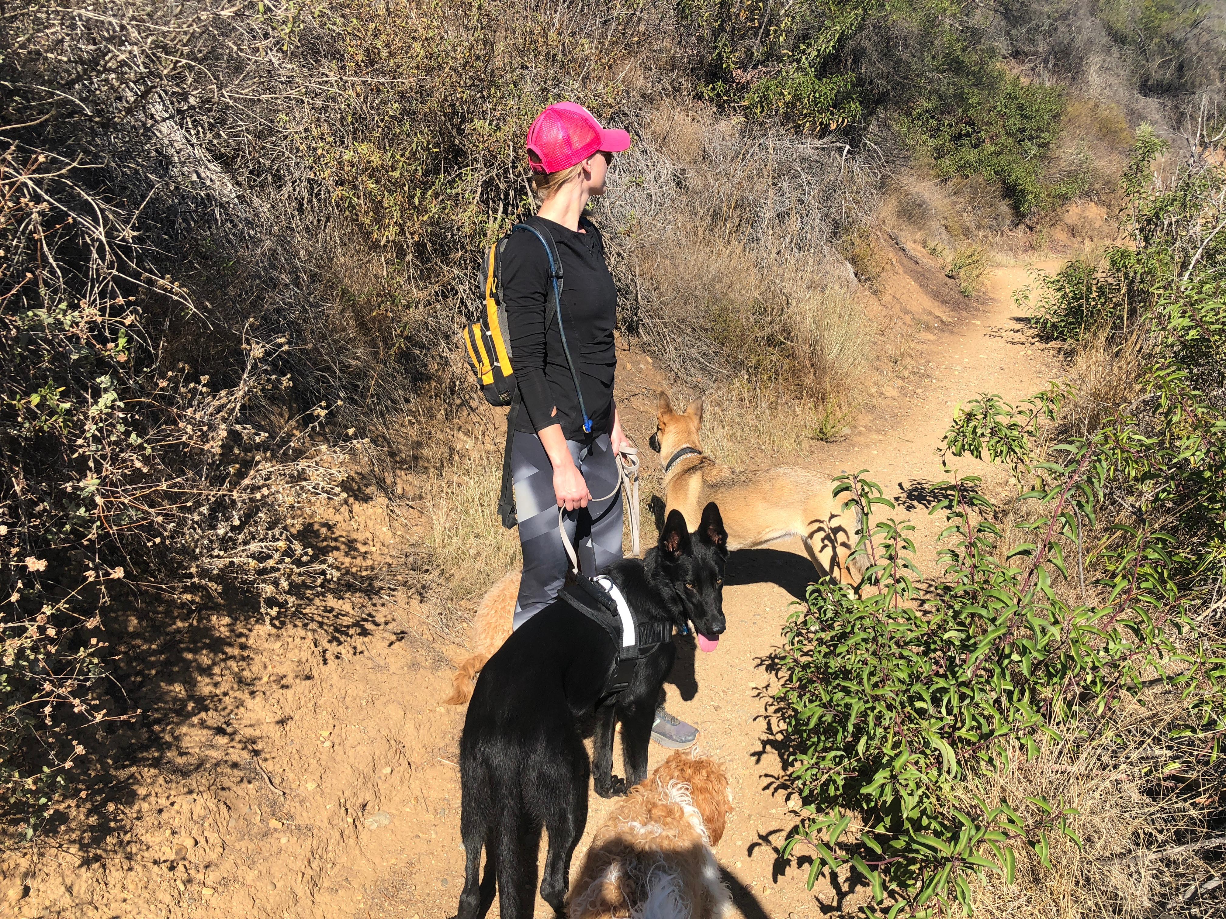 Doggy Hike
