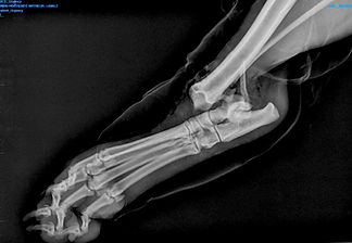 radiologie veterinaire
