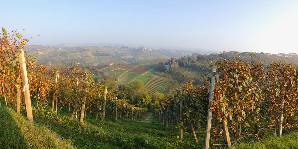 Virtual Friuli Wine Dinner with Scarpetta Wines — SOLD OUT