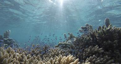 Coral_blue_tiny_fish_1_edited.jpg