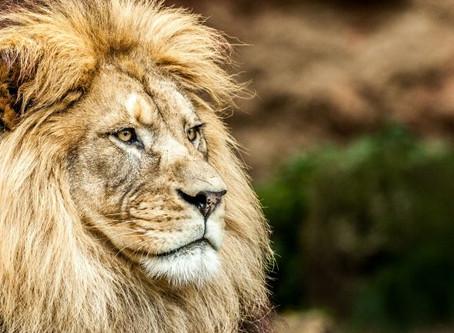 Královské znamení Lev