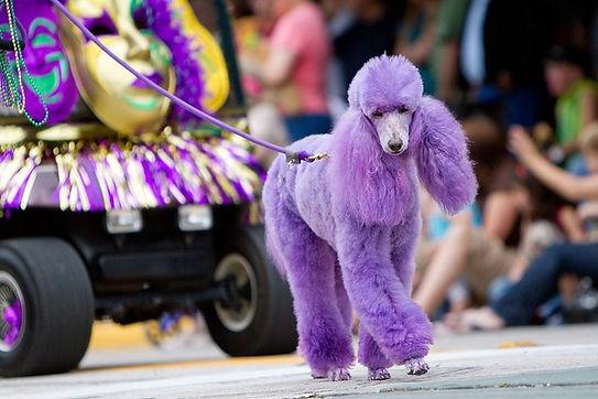 Deland mardis gras dog parade
