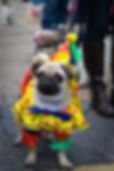 Dog Parade Central Florida