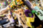 Mardis Gras Parade Deland