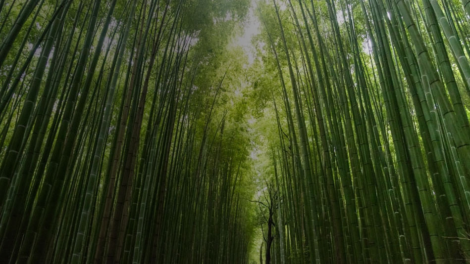 Your Biz is Like a Bamboo!