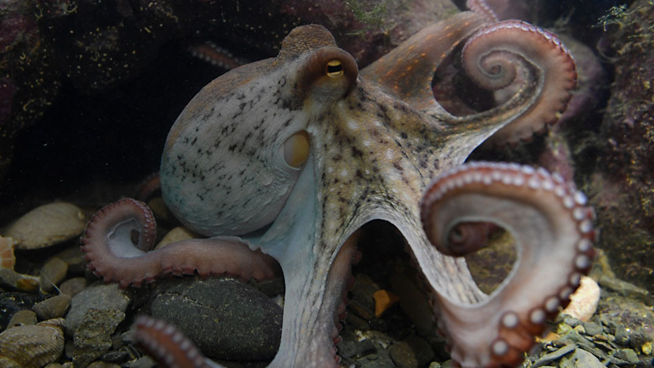 Octopus and Tentacle Training – How to make your Content Immortal through Native Syndication!
