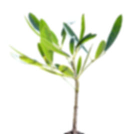Small Young Tree