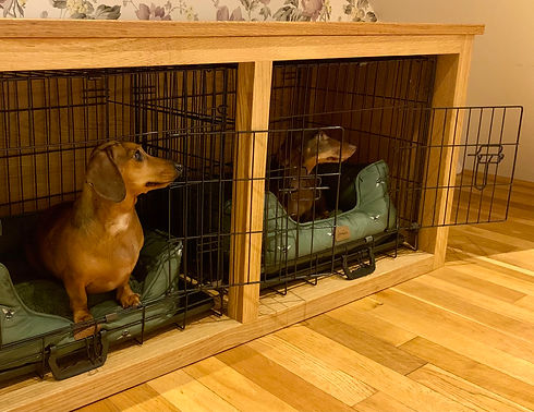 dachshund dogs in their new home.jpg