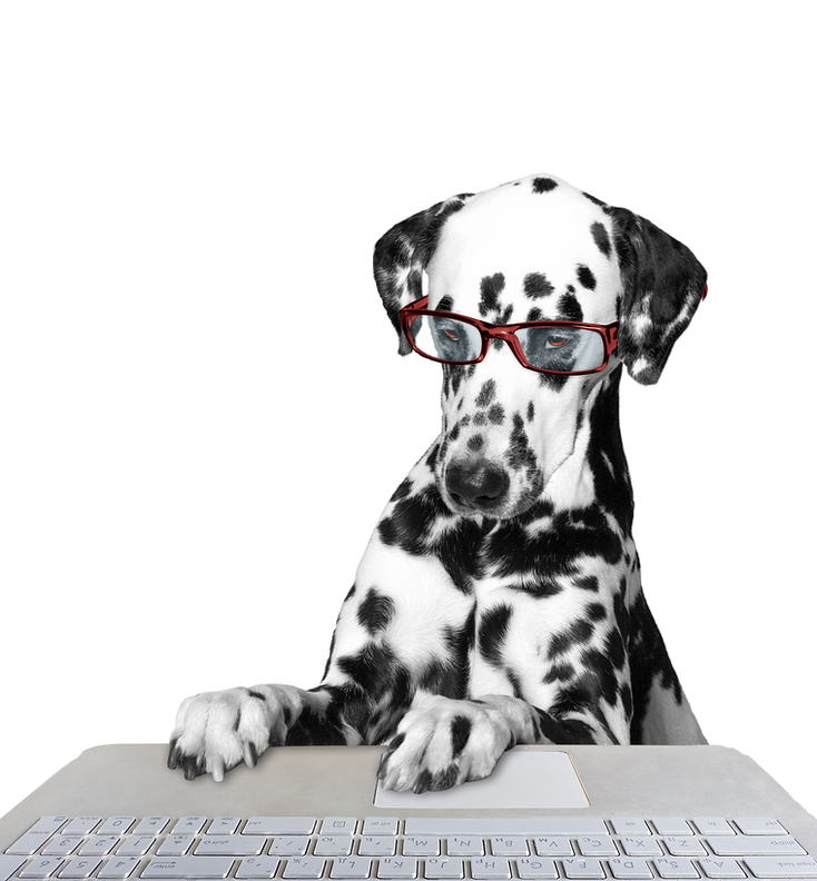 Dog working on the computer -- isolated