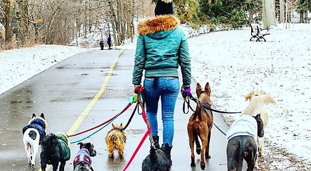 dog walker - london ontario