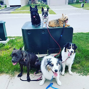 Just a pack of 6_#dogsdaily #doggydaycar