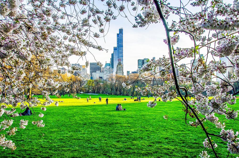 Spring day in Central Park New York