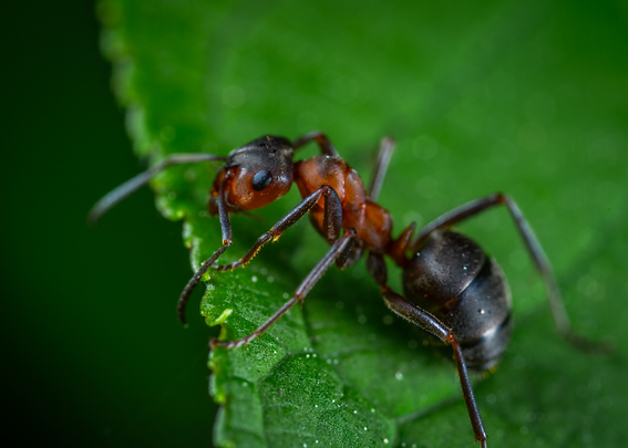 ANTS | Armorpestcontrol