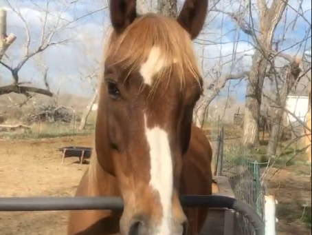 Rusty the Ranch Horse gets breakfast