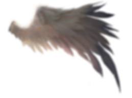 WING.png
