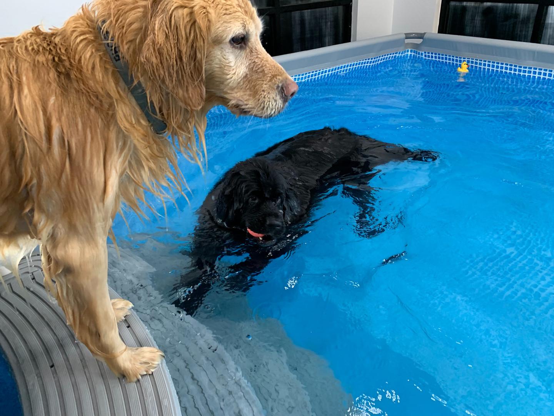 Swimming around