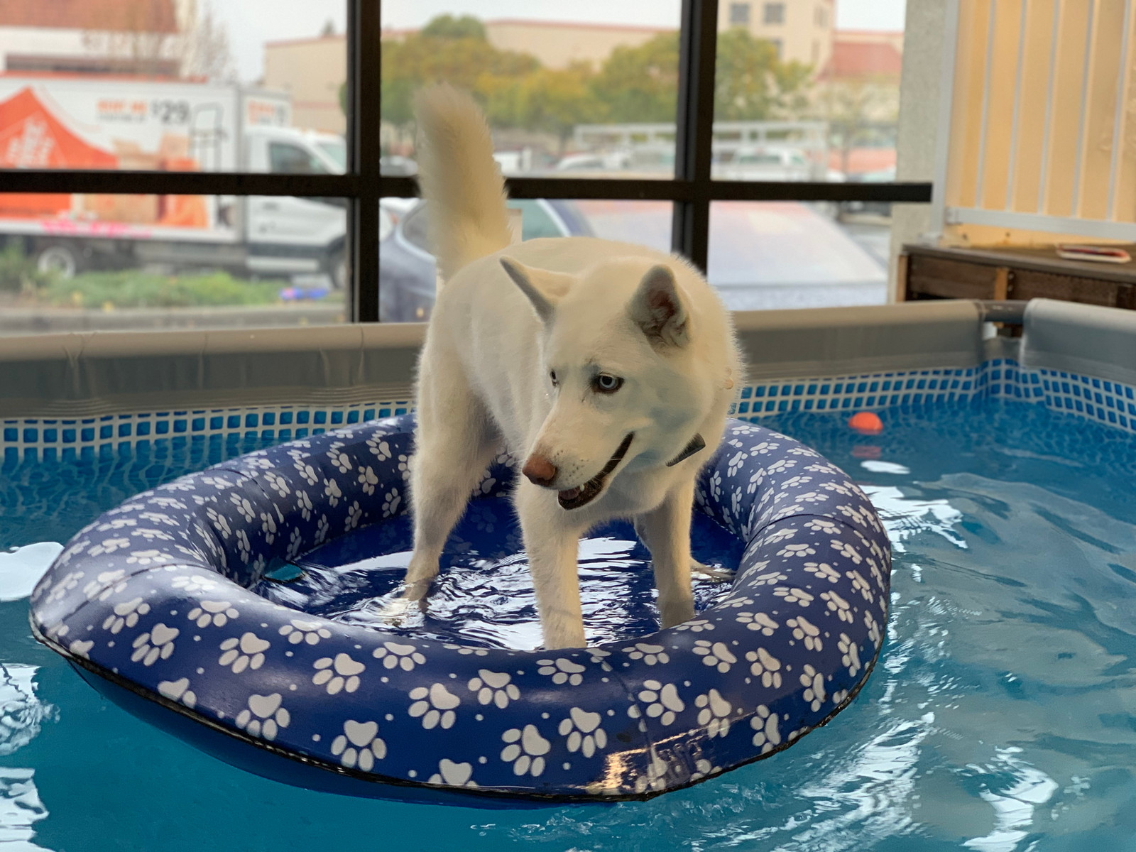 Surfing the pools | Swimming Pool For Dogs SF Bay Area | Dog ...