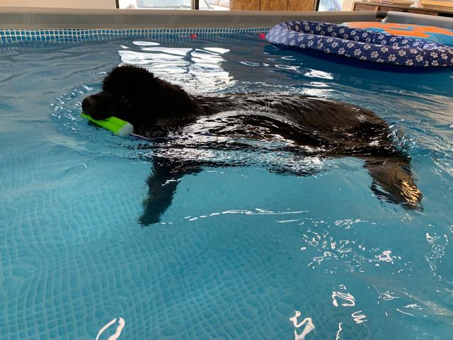 Lily needs her swim